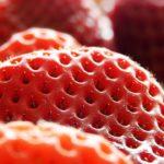 イチゴが愛犬の寿命を延ばす!?歯肉炎などに効くインターフェロンを含む苺が使われている【初耳学】