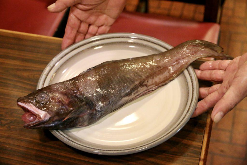 高級魚より美味しいリリース魚ドンコ
